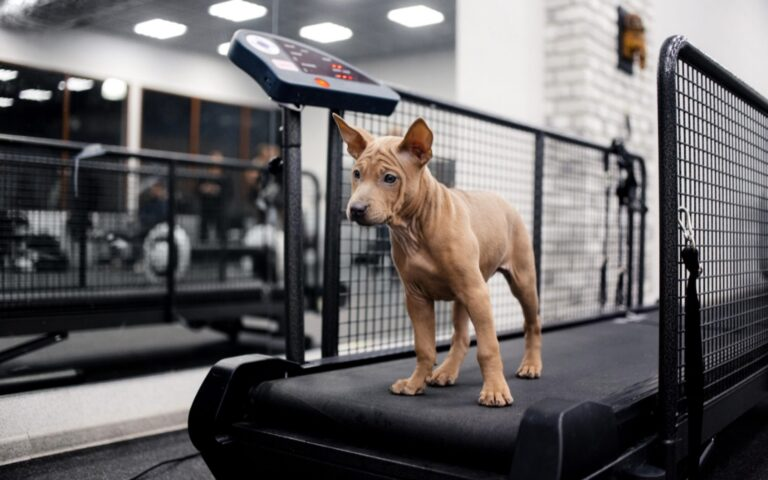 The importance of exercise for your dog's health